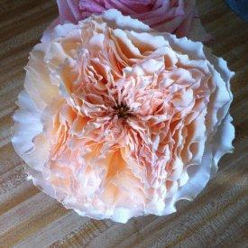 new garden rose